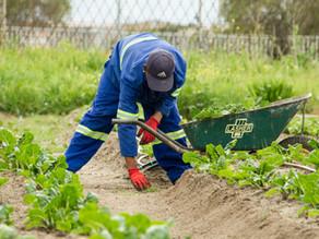 Eén op de vier wijkwerkers na één jaar duurzaam aan het werk