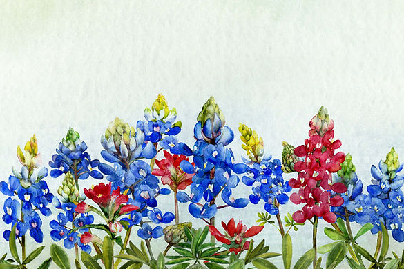 bluebonnets and indian paintbrush FB tin