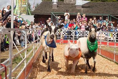 gascar animals running FB tinypng.jpg