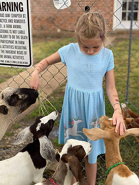 GIRL AND ANIMALS- GREAT AMERICAN LONE ST