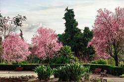 Voyages à Rome - Villa-Borghese