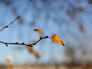 Autumn light ....holding on