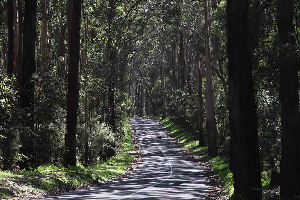 Great Otway National Forest