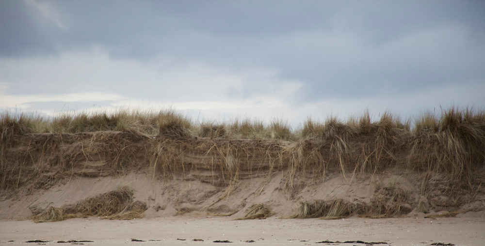Dunes at Tentsmuir