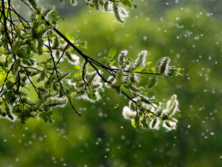 Tis the season for sneezin'- But you can breeze on through with these allergy tips