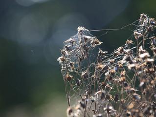 3 Steps To A Healthy Allergy Season