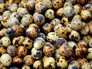 Allergy medicine from quail eggs? Why not. Aspirin came from willow bark.