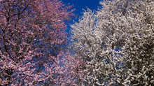 Meet Your Seasonal Contenders for Springtime Allergies