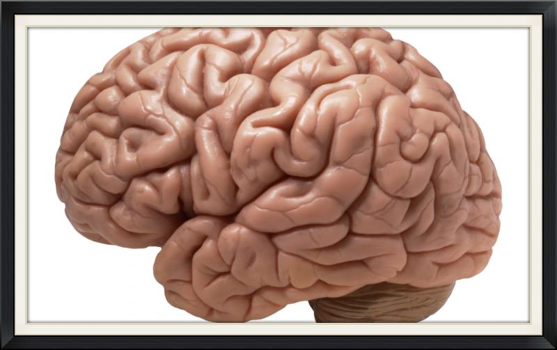 brain-990x622_edited.png