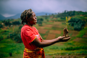 Planting trees - One Tree Planted