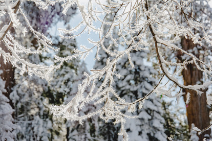 macro photography of ice on tree branches
