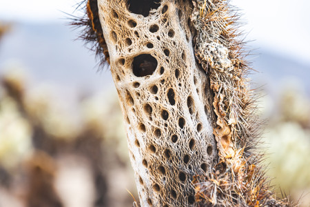 Close up inside Cholla Cactus macro photography