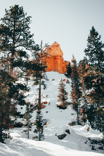 Bryce Canyon forest during winter