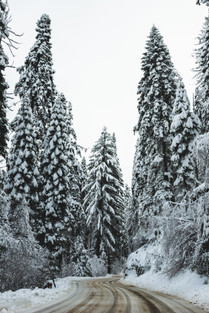 snow on forest pine trees winter photography