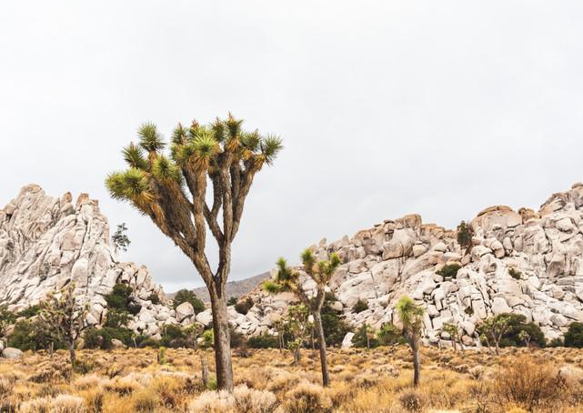 Joshua Tree Photography Timothy De Ridder
