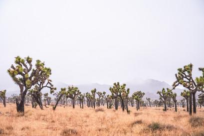 Mist in Joshua Tree National Park moody lansdcape