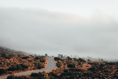 mist on the road in Joshua tree national park