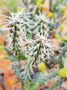 Macro images of cactus