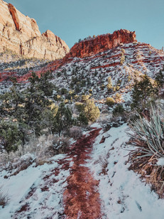 winter photography in Zion national park