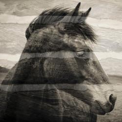 ripley stratified horses no 22 square.jpg