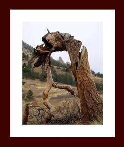 tree Flatiron.jpg