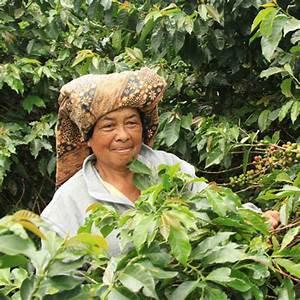 Indonesia Sumatra Mandheling Gr.1 Triple Picked