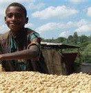 Ethiopia washed Yirgacheffe Gr.2