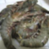 black-tiger-prawns-500x500.jpg