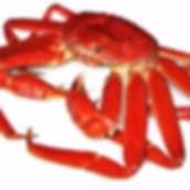 Snow Crab.jpg