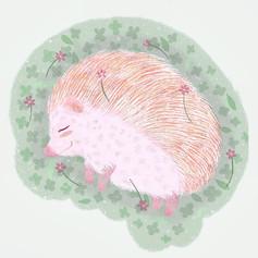 Dream, dream little hedgehog.