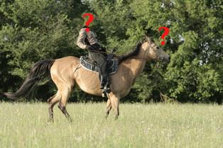 Tvrdohubost vyjíždkových koní