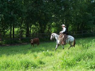 Má cesta ke koni