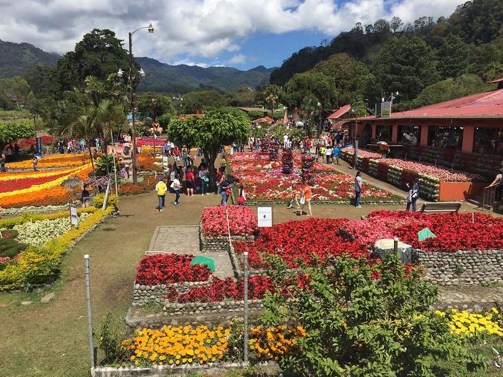 Feria de las Flores - Boquete
