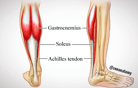 The Power Of The Calves