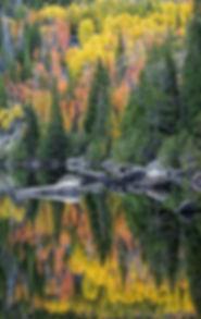 thumbnail_Bear Reflection V DSC1741.jpg