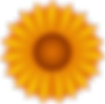 flowers_yellow_sunflower_1000.png
