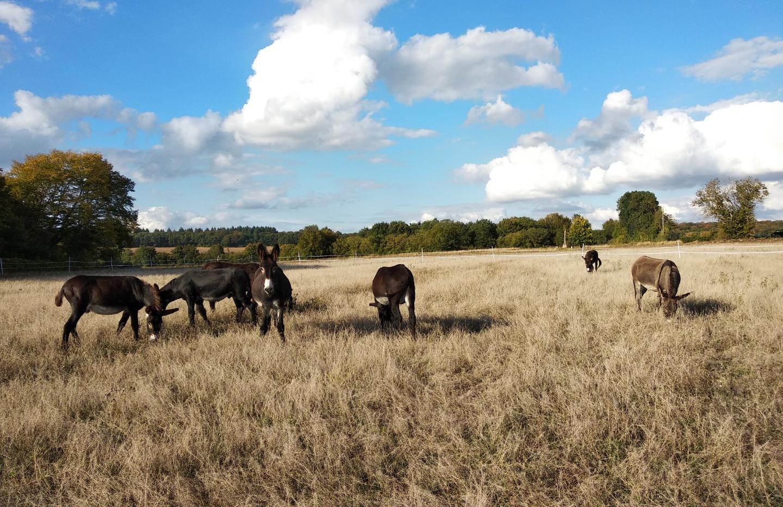 Les ânes du Petit Bonheur 21