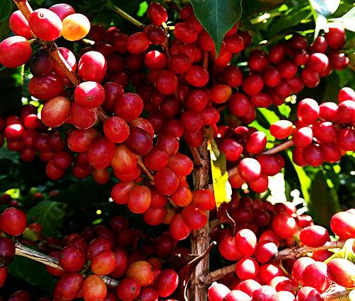 Montecarlos Coffee