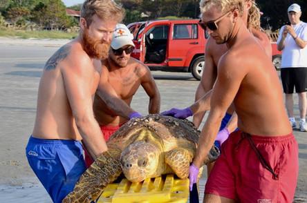 Rescue Sea Turtle
