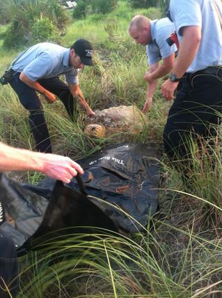 Hilton Head Rescue Sea Turtle