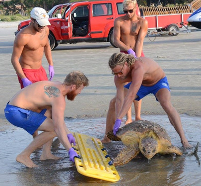 Sea Turtle Beach Rescue