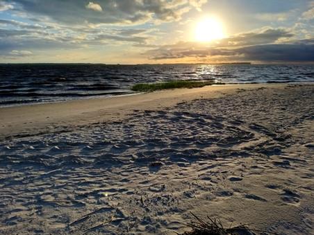 Sea Turtle Tracks Sunset