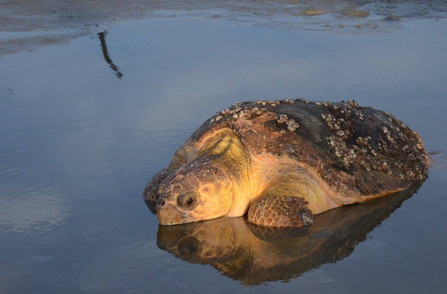 Sea Turtle Beach