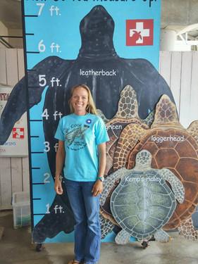 Sea Turtle Scale Hilton Head