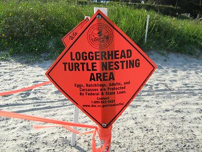 Loggerhead_nesting_area.jpg