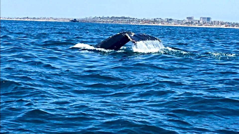 Blue Whale sighting