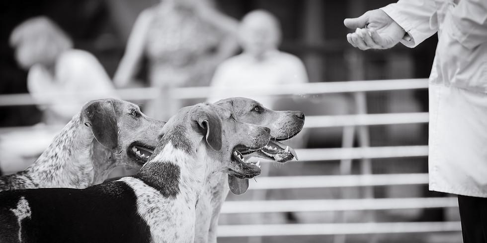 Mid Devon Hunt Puppy Show