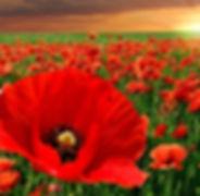 Flanders-Fields-Ypres.jpg