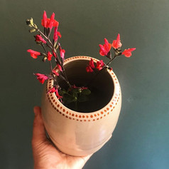 •• vase •• Sauge odorante du jardin dans