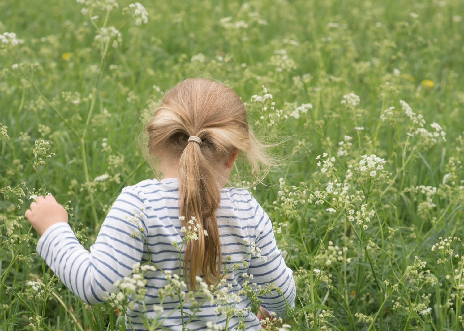 Little girl walking through field